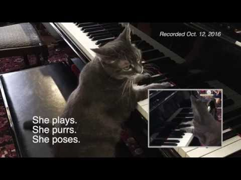 Nora The Piano Cat on 10.12.16