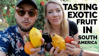 Tasting 13 Exotic Frขits You've Never Seen Before   South America