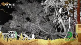 《秘境之眼》 海南鳽 20200726| CCTV - YouTube