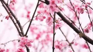 Beethoven - Primavera (Spring/Frühling)