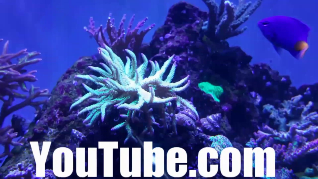 Saltwater fish tank youtube - Coral Placement Gluing Coral In My Saltwater Aquarium Reef Tank
