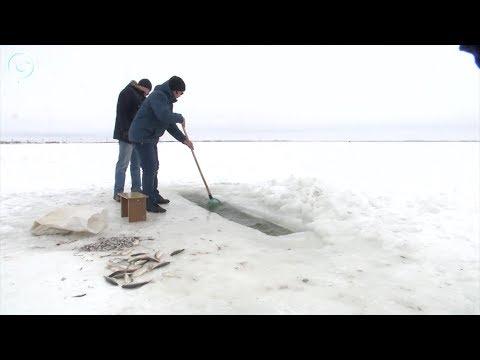 Почему замор рыбы в озёрах Карасукского района беспокоит рыбаков, но не волнует чиновников?