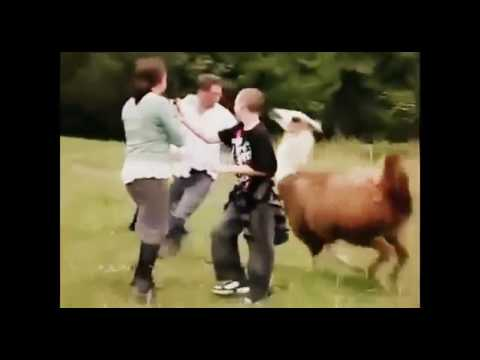 Animal dr le vid os dr le attaques d 39 animaux youtube - Videos droles d animaux ...