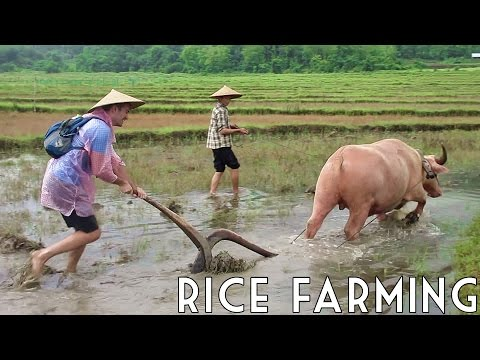 I'M A RICE FARMER! 🍚 // Luang Prabang, Laos (w/ Backstreet Academy and the Living Land Farm Laos)