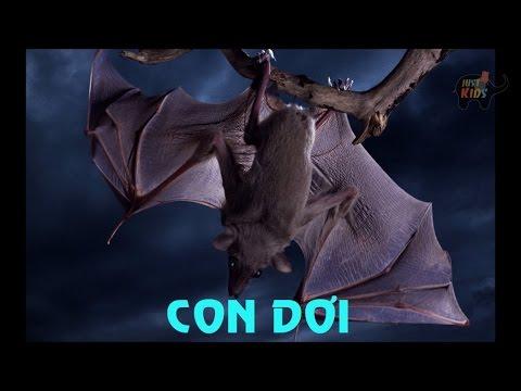 Tiếng kêu động vật | HÌNH ẢNH VÀ TIẾNG KÊU CỦA CON Dơi Sounds and image of BAT