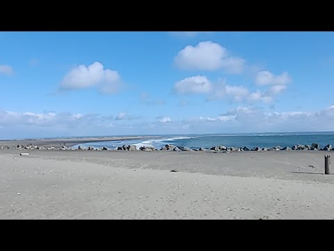 Chilling At The Beach, Washington Coast, Live
