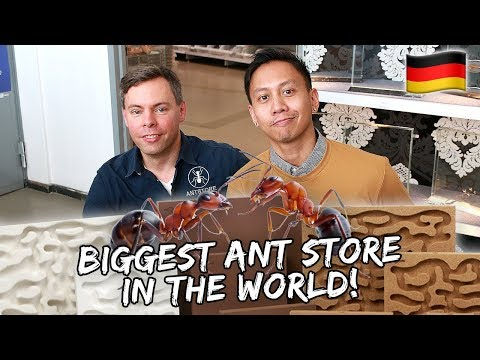 Visiting The Coolest ANTSTORE In The World | Vlog #558