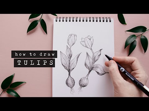 How To Draw Tulips | Floral Illustration For Beginners thumbnail