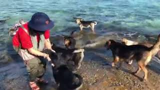 MC Hoàng Linh và những chú chó ở Đảo Len Đao, Trường Sa