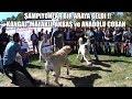 ŞAMPİYONLAR BİR ARAYA GELDİ ( Kangal, Malaklı, Akbaş Ve Anadolu çoban Köpeği ) Biggest Dog