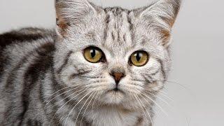Мир глазами кошки!