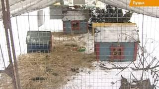 Животных в луцком зоопарка кормят... новогодними елками