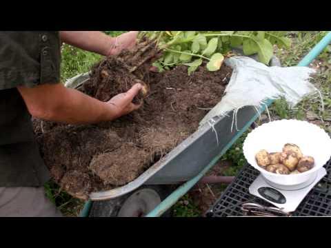 Картофель в мешках ( 3 подсыпка)