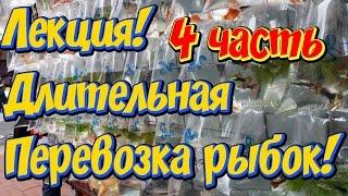 Адаптация аквариумных рыбок после длительной транспортировки! Профилактика и лечение рыбок, 4часть