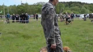62 выставка охотничьих собак в тамбове