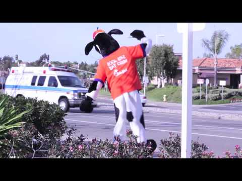 Chick-fil-A Cow Dancing to Black Eyed Peas