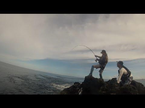 The fishing DogTooth TUNA 磯からイソマグロを釣る ミュートスアキュラ使用