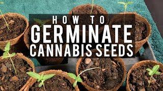 Seeds, Soil & Sun: How to Grow Cannabis (#1 Germinating Seeds) screenshot 5