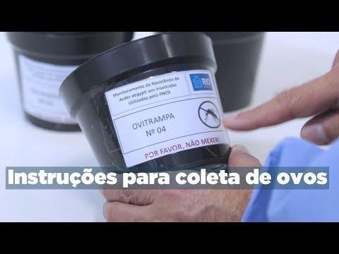 Metodologia para coleta de ovos Aedes aegypti