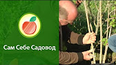 Подготовка ямы и посадка саженца - YouTube