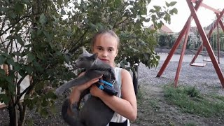 Русская голубая кошка- первая прогулка. Russian blue cat, the first walking in the street