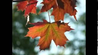 АлисА - Только этот день (Осеннее солнце)