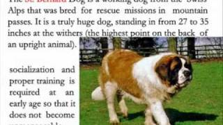 Largest Dog Breeds- Some Important Factor