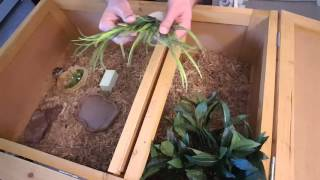 How To Setup A Tortoise Habitat - Marginated Tortoise Hatchling