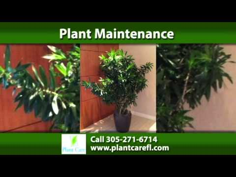 Plant Leasing Company in Miami | Plant Care