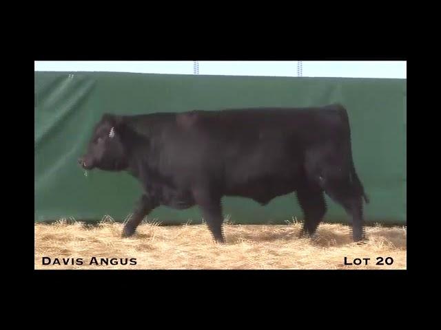 Davis Angus Lot 20