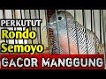 Perkutut Rondo Semoyo Gacor Manggungsi Kupluk Pak Yoko  Mp3 - Mp4 Download