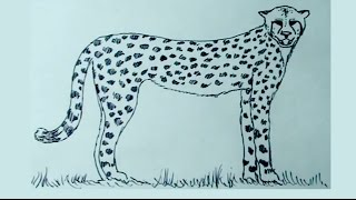 Dibujos de animales 4/8 - Cómo dibujar un guepardo -  cheetah drawing