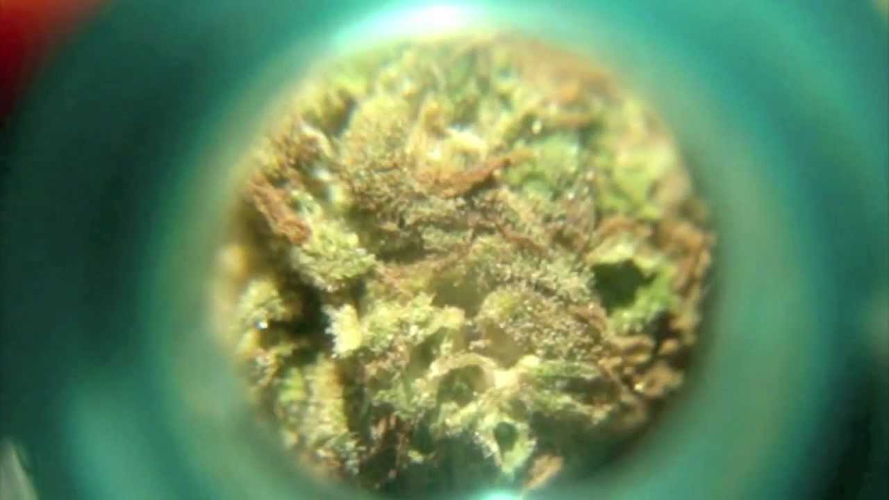 how to keep an ounce of weed from smelling
