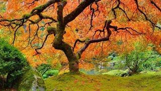 Musique Relaxante Avec L'influence Asiatique - Nature Relaxation