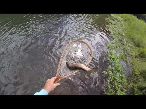 East Branch Delaware River, Flyfishing, August 2016