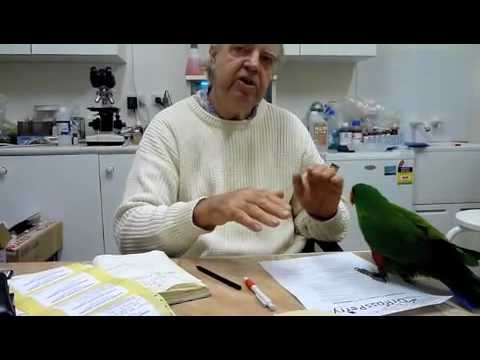 Behavioural Problems in Randy Eclectus Parrot #2 220710