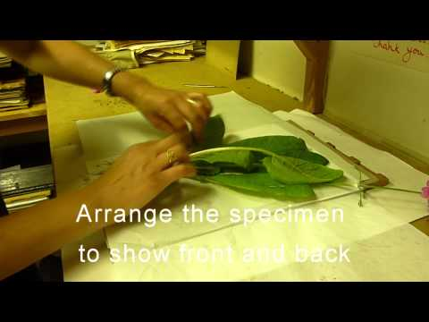 RBGE Herbarium: Basic Plant Collecting and Pressing