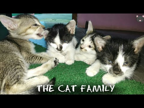 Cat Family Introduction 😺- Indian Cats