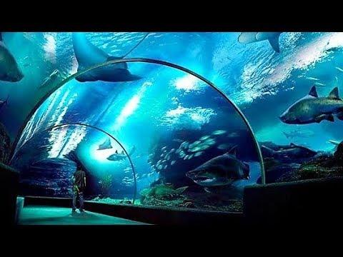 Sea Life - Ocean World Bangkok Tour || Feb 2018 ||