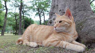 【猫姉妹】森の中で木に寄り添って眠る猫達