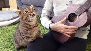 야옹야옹 노래하는 고양이