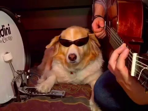 Dog Plays Instruments - Best of Trench and Maple Vines pt.2