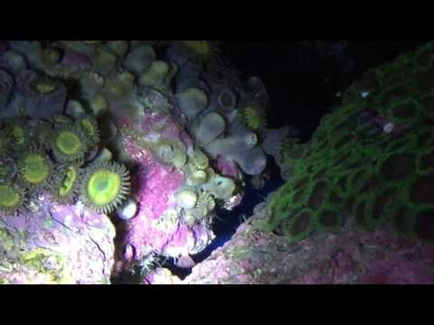 Amphipods Eating Palys | Zoas: Part 2