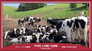 牛の放牧風景とエサの話。