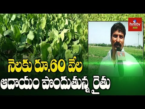 Anantapur Farmer Earning High Profits In Leafy Vegetables Cultivation | hmtv Agri