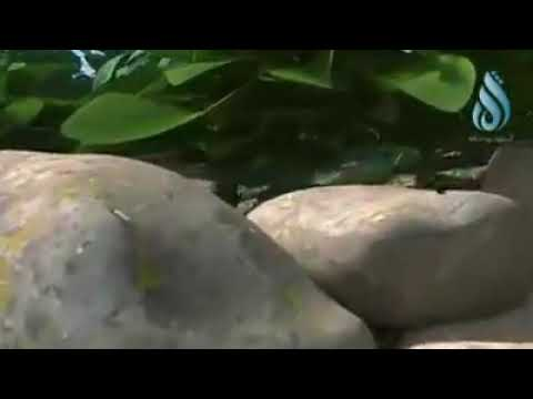Haïti ka chanje gad video sa epi wap konprann belle leson