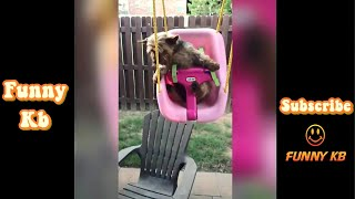 #2 Super Funny Moments - Funniest fails situations of animal [ 超面白い瞬間 ]