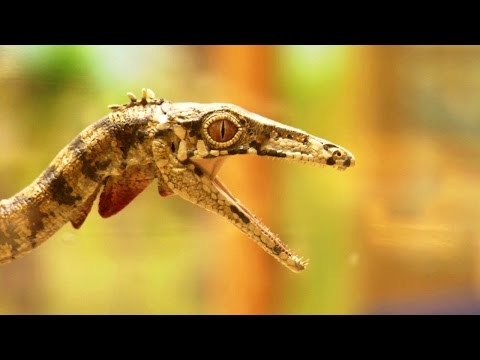 Genesis - Scientific Creationism