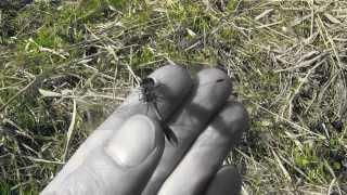 Libelle lässt sich streicheln