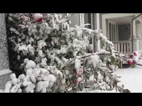 First Snow Fall Of The  Season--Alberta-Canada